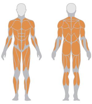 Grupos Musculares - Inside